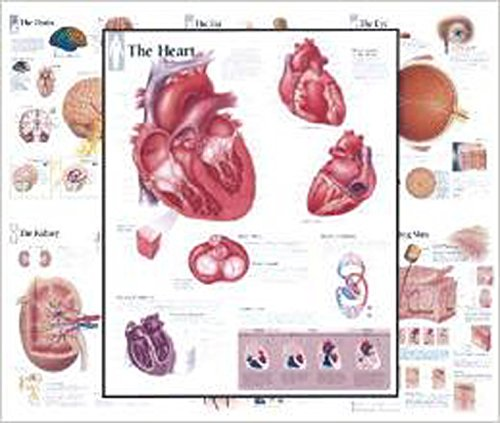 Body Organ Wall Chart Set of 7 (7-charts Set)