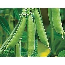Zuckererbse Ambrosia 50 Samen