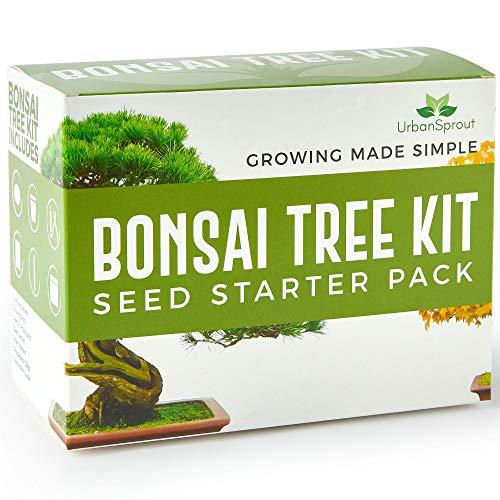 Kit Bonsai - Kit per crescere il tuo Albero Bonsai a partire dal seme - Regali originali per amanti giardinaggio e piantine - Set...