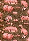 Fat Quarter Schweine und Ferkel, Bauernhof, Baumwolle, 50 x
