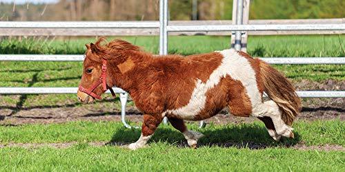 UniqueTowel Badetuch Badehandtuch Handtuch - Motiv Shetland-Pony Pferd auf grüner Weide - groß...