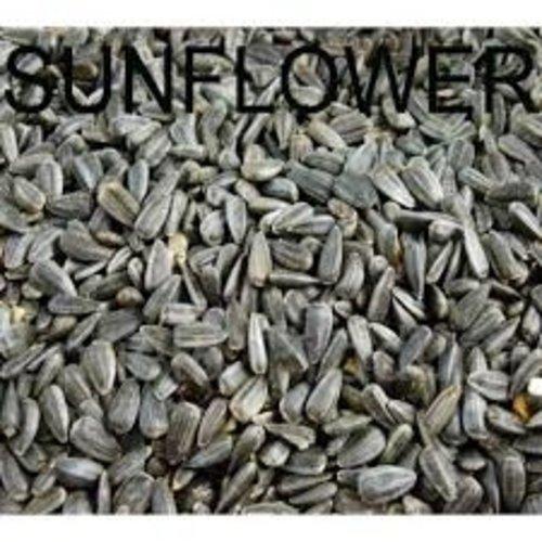 Amijivdaya Sunflower Seed Bird Food, 5 kg
