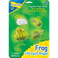 Insect Lore Frog Life Cycle Stages Children, Kids, Game