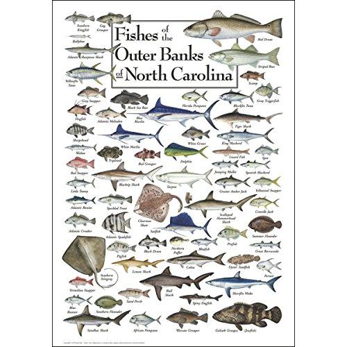Earth Sky & Wasser Poster-Fische mit der Äußeren Banken -