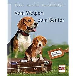 Vom Welpen zum Senior: Reise durchs Hundeleben