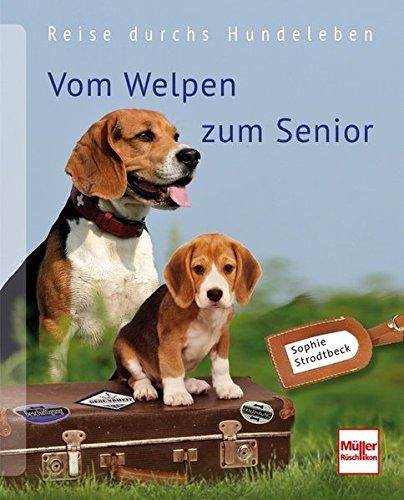hundeinfo24.de Vom Welpen zum Senior: Reise durchs Hundeleben