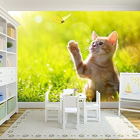 Juegos del gatito con la mariposa en prado animal de pared de la foto de fondo de pantalla disponible en 8 tamaños Gigantesco Digital