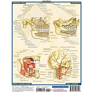 Dental Anatomy: Reference Guide (Quick Study Academic)