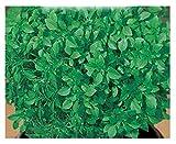 Inception Pro Infinite 2400 C.ca Semi Basilico Fine Verde Greco - Ocymum Basilicum In Confezione Originale Prodotto in Italia
