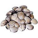 Sea Shell For Aquarium And Home Decoration 100 G (Pack Of 2) 44-48pcs