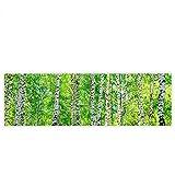 Leinwandbild 145x45 cm PREMIUM Leinwand Bild - Wandbild Kunstdruck Wanddeko Wand Canvas - BIRCH FOREST - Birkenwald Bäume Wald Sonne Birkenhain Birke Birken Gras Natur Baum - no. 007