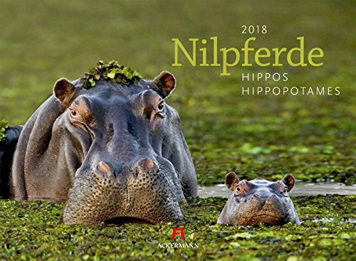Nilpferde - Kalender 2018 - Ackermann-Verlag - Wandkalender - 45 cm x 33 cm (Bösen Kalender)