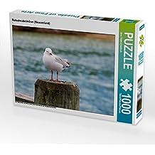 Rotschnabelmöwe (Neuseeland) 1000 Teile Puzzle quer: ein freies und wildes Leben an den Küsten der USA, Neuseeland und Australien (CALVENDO Tiere)