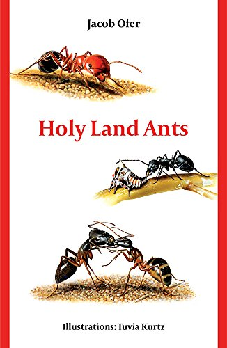 Holy Land Ants (English Edition) - Wissenschaft Ant Farm
