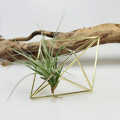 Blumen-Anlagen-Stand Airplant-Halter-Wand-hängendes Tillandsia-Metalleisen-geometrische Anzeige