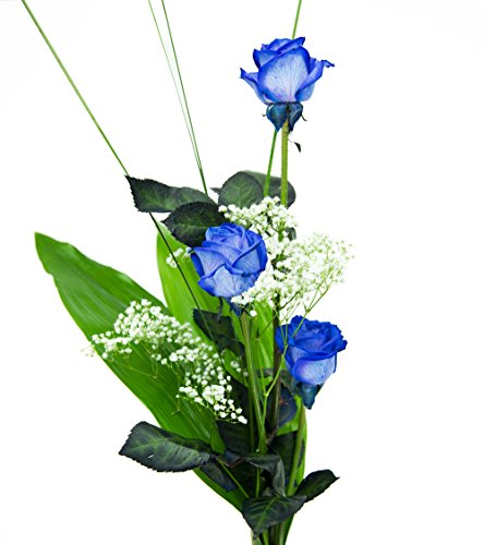 floristikvergleich.de Drei blaue Rosen inkl. gratis Kultvase