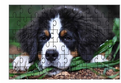 Bernese Mountain Dog Puzzle 60 pezzi 30