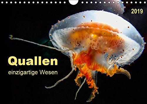 Quallen - einzigartige Wesen (Wandkalender 2019 DIN A4 quer): Sie sind uralt und sehen ganz harmlos aus, doch Quallen gehören zu den giftigsten Tieren ... (Monatskalender, 14 Seiten ) (CALVENDO Tiere)