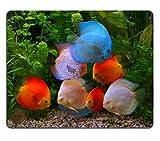 Yanteng Tappetino per Il Mouse Tappetino per Mouse in Mousepad con Dischi Colorati Symphysodon Cichlids nell'acquario, Il Pesce d'Acqua Dolce originario del Bacino del Rio delle Amazzoni