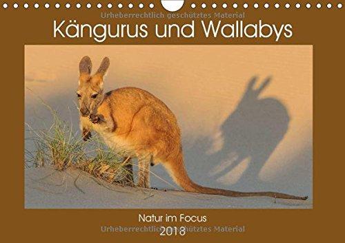 Kängururs und Wallabys (Wandkalender 2018 DIN A4 quer): Das Känguru ist Nationalsymbol bzw. auch Wappentier von Australien und vermutlich das ... (Monatskalender, 14 Seiten ) (CALVENDO Tiere)