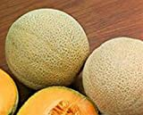 "Premier Seeds Direct OM-ID71-ODIK Cantaloupe- Melone ""Best Jumbo"" Samen (Packung mit 100)"