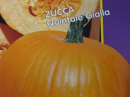 Zucca quintale Gialla-Gelb Zucca Kürbis-Samen-4 gms
