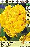 Gefüllte gefranste Tulpen