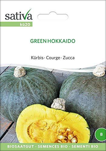 Sativa Rheinau kü20 Kürbis Green Hokkaido (Bio-Kürbissamen)
