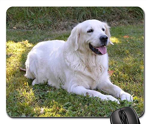 Gaming-Mauspads, Mauspad, Hundehündin Golden Retriever Sunset Female Doggie