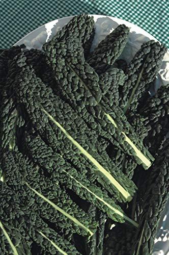 AGROBITS Légumes - Chou Frisé - Nero Di Tosna - 300 Graines - Économie