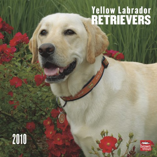 Yellow Labrador Retrievers 2010 -