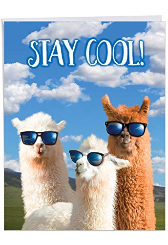 Cool Llamas - Congratulations From All of Us Karte mit Umschlag (Briefkopf, 21,6 x 27,9 cm) - mit drei Sonnenbrillen tragbaren Lamas J7188CGG-US