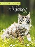 Katzen 2017: Foto-Wochenkalender