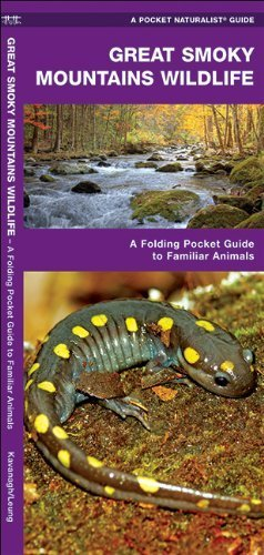 Great Smoky Mountains Wildlife: A Folding Pocket Guide to Familiar Species (Pocket Naturalist Guide Series) Fol Lam Ch edition by Kavanagh, James (2011) Pamphlet (Smoky Mountain Wildlife)
