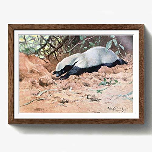 BIG Box Art Vintage W H. Kuhnert afrikanischen Honey Badger Eiche, gerahmt, Print, Mehrfarbig, 24,5x 18/62x 45cm/a2-p, Holz, walnuss, 24.5 x 18-Inch/62 x 45 cm/A2 - Afrikanische Walnuss