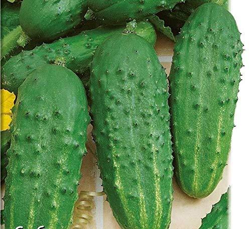 Shoopy Star 5: 100 Pcs ail Rouge et sain Bonsai DIY des Plantes rares Oignon Garlics LãGumes Voir
