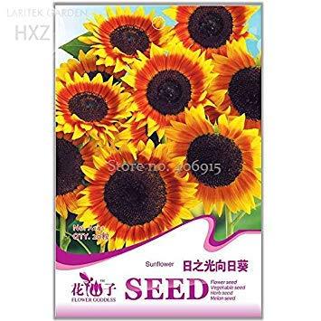 Pinkdose2018 Heißer Verkauf SchÃne Sonnenblumen Zier Blumensamen, 20 Samen, Organische Helianthus annuus Samen Garten Blumensamen Anlage A141 -
