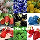 12 clases de diversas semillas de fresa (verde, blanco, negro, rojo, azul, enorme, mini, Bonsai, rojo normal, Pineberry fresa)
