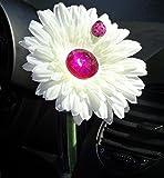 Blume, weiß pink bling Daisy