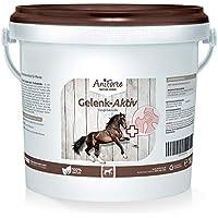 Garra del Diablo para Caballos en Polvo 1kg. | Antiinflamatorio Natural para Caballos | Hargapofito | Aniforte