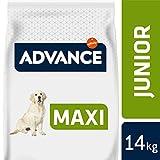 Advance Nourriture Maxi Junior Poulet pour Chien 14 kg