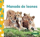 Manada de leones / Lion Pride (Grupos De Animales)