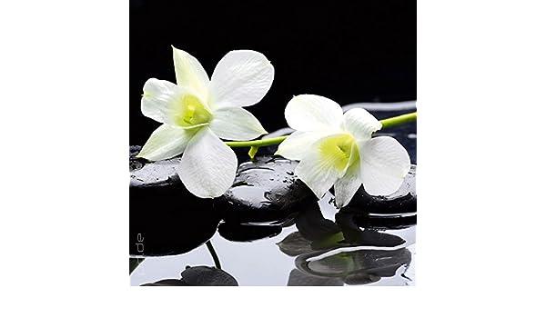 Blume Orchidee  Glasbild 30 x 80 cm Wandbild Echtglas mit Wandhalterung