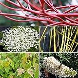 5 Schnellwachsende Sträucher für den Garten