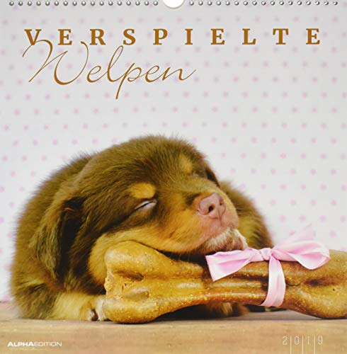 Verspielte Welpen - Puppies - Bildkalender - (33 x 33) - Wandkalender -