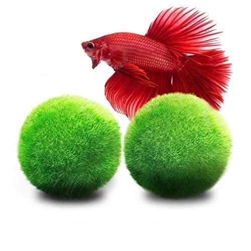 LUFFY Marimo Moss Balls - Estéticamente hermoso y crea un ambiente saludable...