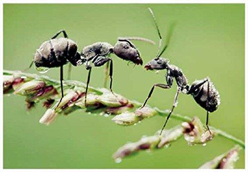 3-d-ansichtskarte-ameisen-ameise-postkarte-wackelkarte-hologrammkarte-tiere-waldtiere