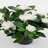 Artificiali–Gardenia Pianta fiori artificiale 8fiori H 25cm in vaso