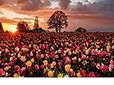 Puzzle 1000 Piezas Cuadro De Pared De Flor Rosa Adulto Rompecabezas Diy Kit De Juguete De Madera Regalo Único Decoración Para El Hogar