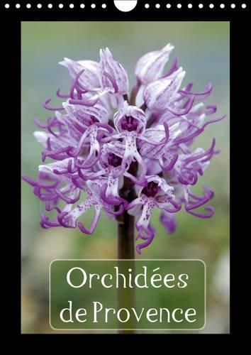 orchidees-de-provence-2017-orchidees-rencontrees-dans-les-alpilles-et-le-luberon